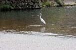 Tsuwano Birdlife