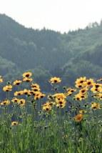 Tsuwano Flowers