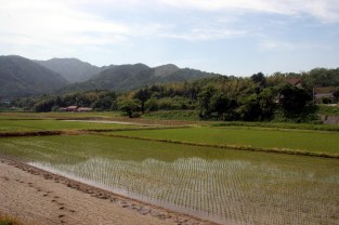 Tsuwano Fields