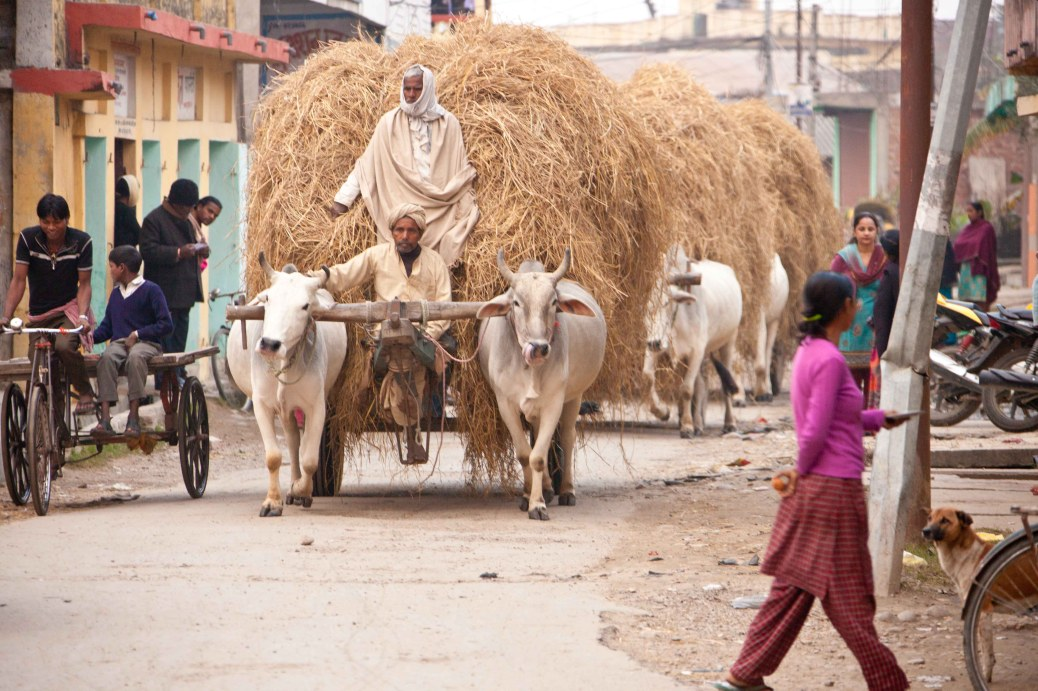 Janakpur Cow Driven carts