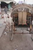 201201-JanakpurWeek3P1 (177 of 273)