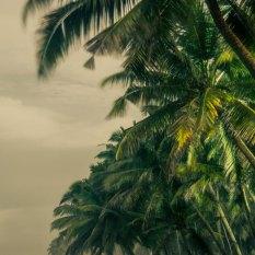 Long exposure palms Varkala