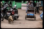 In the Market (1)