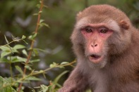 Local Monkey