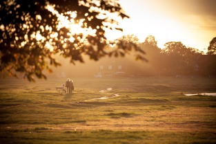 Wimbledon common in Golden Hour (1)