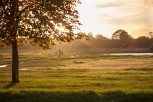 Wimbledon common in Golden Hour (2)