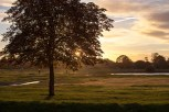 Wimbledon common in Golden Hour (3)