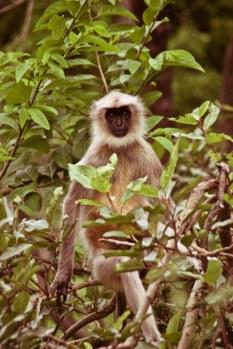 Monkey say - monkey do