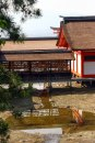 2006-05HiroshimaMiyajima--26