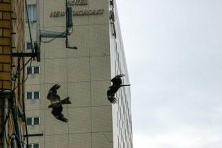 Nagasaki city Hawks
